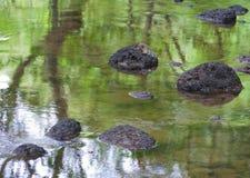 Flot avec des roches, et réflexion d'arbres Photo stock