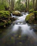 Flot dans la forêt Images libres de droits
