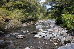 Flot de forêt Photos libres de droits