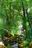 Flot de forêt Photo stock