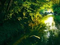 Flot de forêt   Images stock