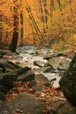 Flot de forêt d'automne Photo stock