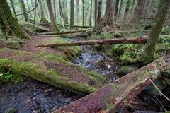 Flot de forêt humide Image stock