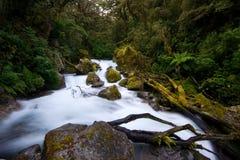 Flot de forêt humide Image libre de droits