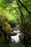 Flot de haute montagne dans la forêt Photos stock