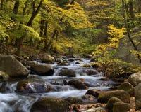 Flot de montagne dans l'automne Images libres de droits