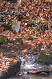 Flot de montagne dans l'automne Image stock