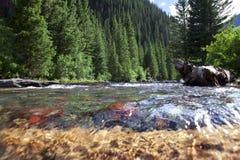 Flot de montagne dans le Colorado Photos libres de droits