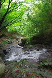 Flot de montagne dans une forêt Image libre de droits