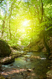 Flot de moutain de forêt Images stock