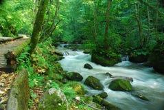 Flot de source dans la forêt profonde Photo stock
