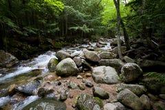 Flot et forêt Photographie stock libre de droits