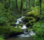 Flot magique de forêt Photographie stock