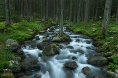 Flot sauvage dans Tatras inférieur Image libre de droits