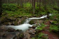 Flot sauvage dans Tatras inférieur Images libres de droits