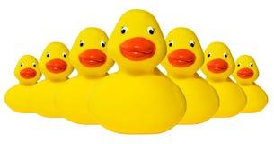 Flota de goma de los duckies Fotografía de archivo libre de regalías