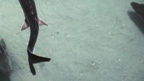 Flotación de diversos pescados almacen de metraje de vídeo