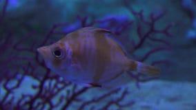 Flotaci?n de los pescados de la vida marina almacen de metraje de vídeo
