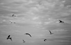 Flotación lejos… Imagen de archivo