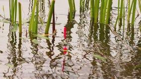 Flotador de la caña de pescar en el lago almacen de metraje de vídeo