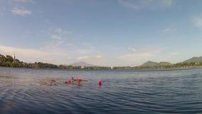 Flotador de la planta de la flor de Lotus en el agua del lago metrajes