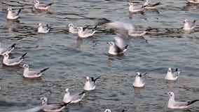 Flotador de las gaviotas en el mar almacen de metraje de vídeo