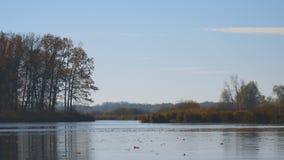 Flotador de las hojas de otoño en el agua Lago o río con agua reservada en la estación del otoño almacen de metraje de vídeo
