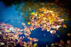 Flotador del leafage del otoño en agua imagen de archivo