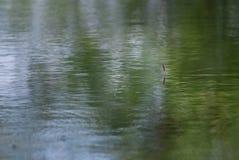 Flotador para pescar en el agua foto de archivo