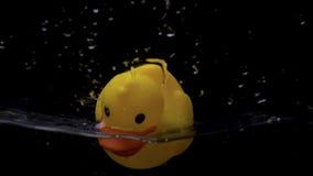 Flotadores de goma amarillos del pato en agua en fondo negro metrajes