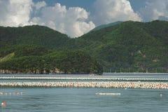 Flotadores en granjas de la acuicultura en República de Corea imagen de archivo libre de regalías