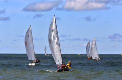 Flotilla of sailing boats. Sailing boats enter the great lake at the United States Sailing Associations Championship of Champions Title at Edgewater Yacht Club Royalty Free Stock Image
