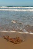 Flotsam. Washed ashore a sunny Mediterranean beach Royalty Free Stock Photography