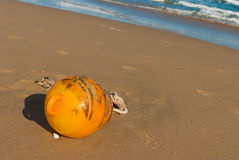 Flotsam Royalty Free Stock Photo