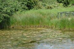 Flotsam湖 免版税图库摄影