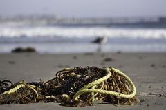 Flotsam and jetsam Royalty Free Stock Photography