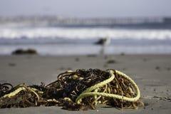 Flotsam and jetsam. Algae and waste angespüllt on the beach Royalty Free Stock Photography