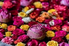 flottörhus blommavatten Arkivfoto
