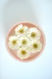 flottörhus blommor arkivfoton