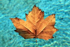 flottörhus leafvatten Royaltyfria Bilder