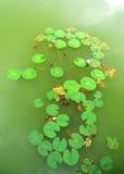flottörhus lotusblomma Royaltyfri Fotografi