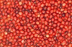 flottörhus skördvatten för cranberry arkivbild