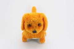 Flott hund Royaltyfria Bilder