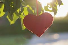 Flott leksak - en hjärta som fästas till ett träd med gröna sidor arkivbild