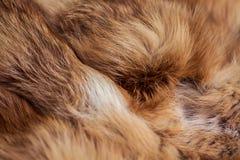 Flott och lyxig päls för röd räv royaltyfri bild