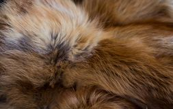 Flott och lyxig päls för röd räv royaltyfri foto
