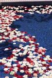 Flottement de roses Photos libres de droits