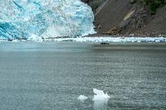 Flotten av unidentifiable turister nära den Holgate glaciären visar set royaltyfria bilder