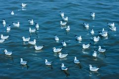 Flotteur de mouette sur la mer Images stock