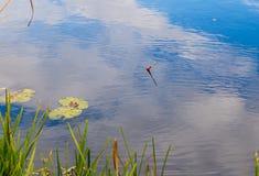 Flotteur de p?cheur sur la surface de l'eau photos libres de droits